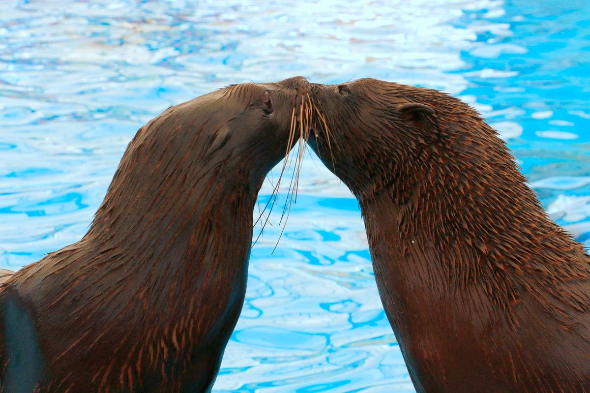 Ponchik กับ Masha แมวน้ำทั้ง 2 ตัว, seals